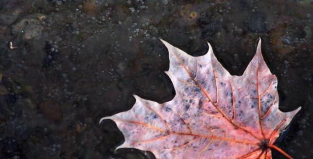 leafreeze